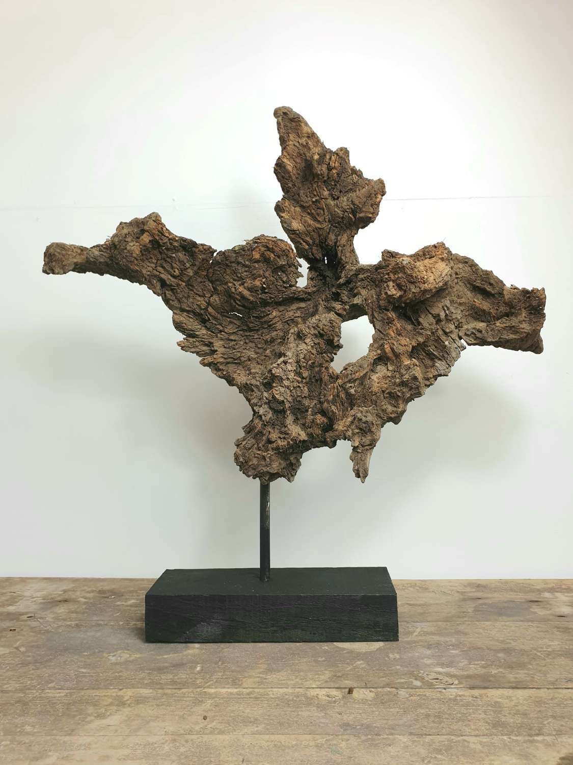 Ancient Welsh Oak Root on Stand