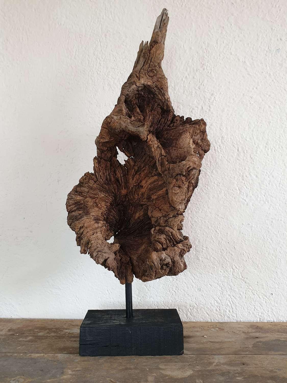 Ancient Welsh Oak Root - Merlin