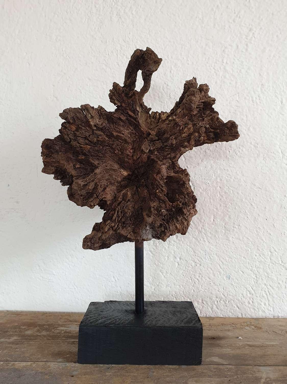 Ancient Welsh Oak Root -Derwyn