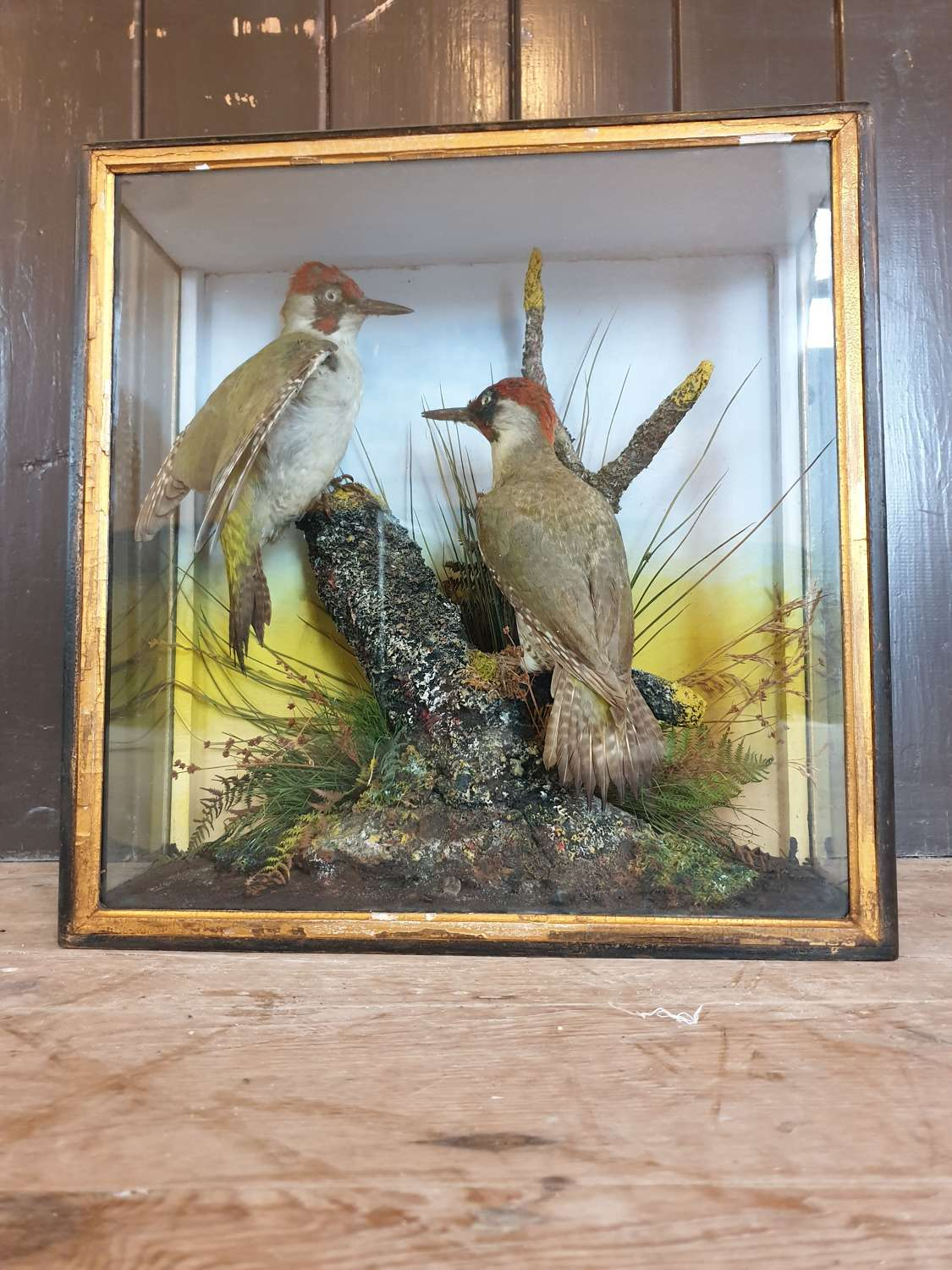 Pair of Taxidermy Green Woodpeckers by J Hutchings of Aberystwyth