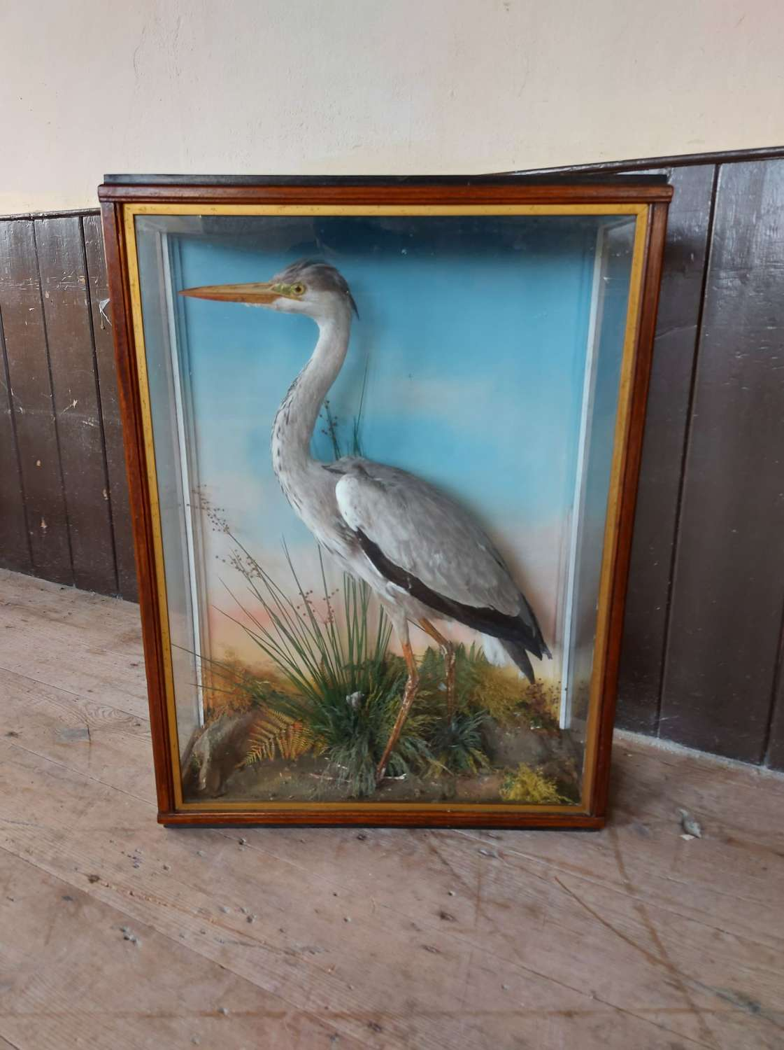 Taxidermy Heron by Jefferies of Carmarthen