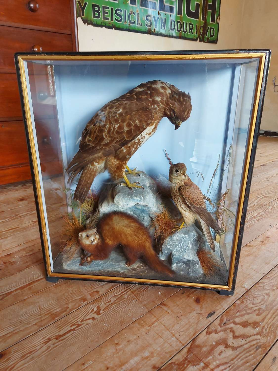 Mixed Taxidermy Case by J Hutchings Of Aberystwyth
